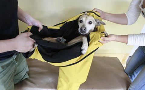 狗狗发生车祸,被车撞的紧急处理方法