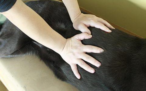 狗狗溺水的正确急救处理方法