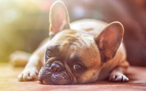 狗狗中毒的紧急处理方法