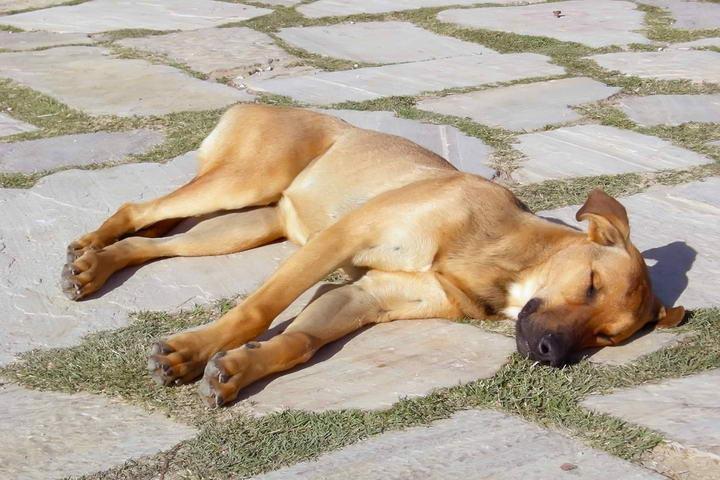 夏日里如何避免狗狗中暑