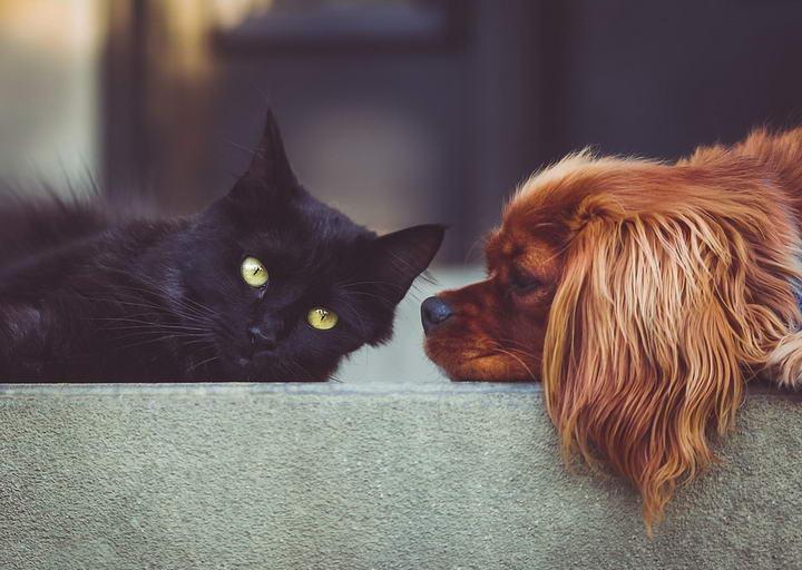 狗狗会对猫咪产生过敏么?
