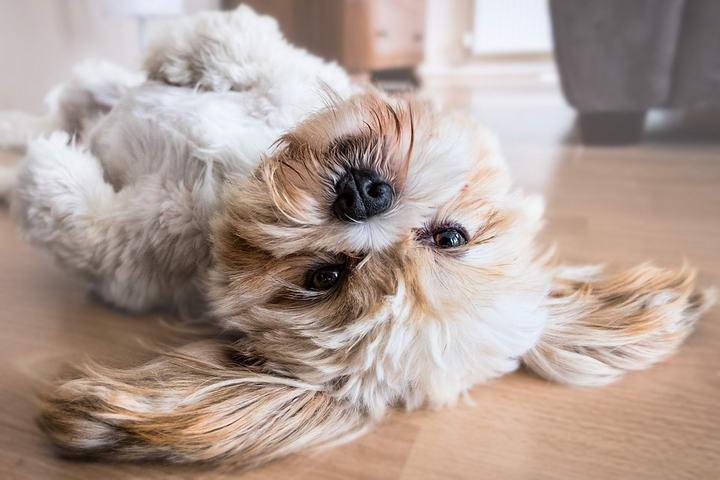 为什么狗狗洗完澡喜欢在地上打滚?