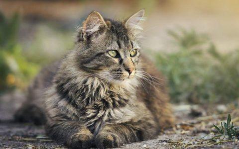 猫咪从几岁起算是老猫?