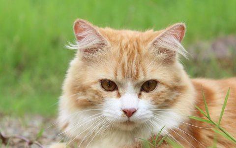 老猫该如何照料?