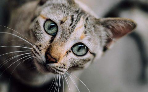 猫咪会有哮喘病吗?