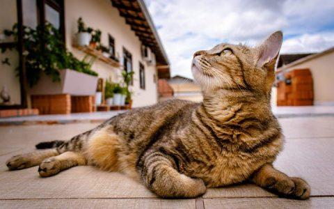 如何判断猫咪是否患有异食癖?