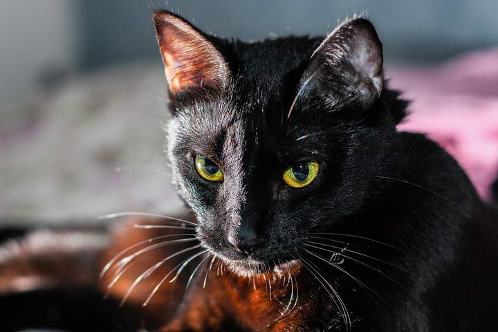 如何改善猫咪的异食癖行为?