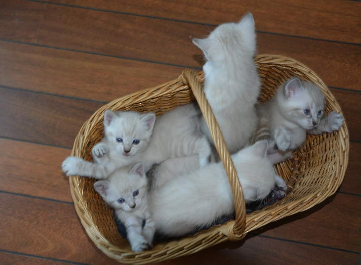 猫咪喜欢吃猫砂,该怎么办呢?