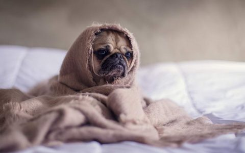 狗狗也会有哮喘病么?