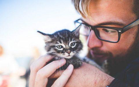 如何判断幼猫体重是过胖还是长得快?