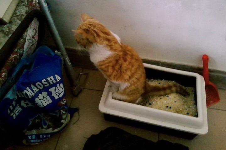 为什么每天都会清理猫砂,但还是臭?用这种方法猫砂盆就不臭了
