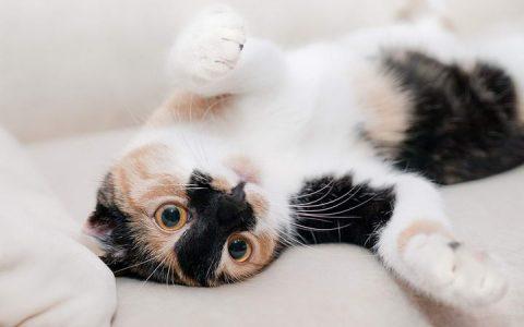 三招让家里的猫咪不再随地大小便