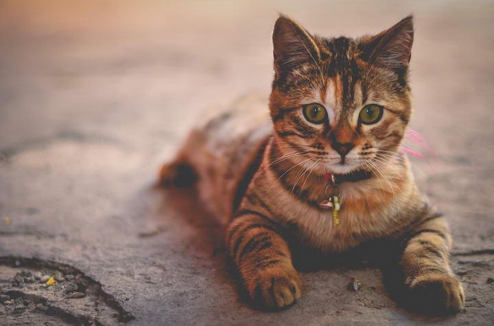 猫咪突然随地大小便的6种应对方法