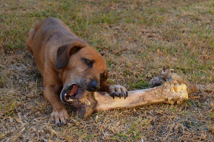 屠宰场菜场里的碎肉可以给宠物猫咪和狗狗吃么?