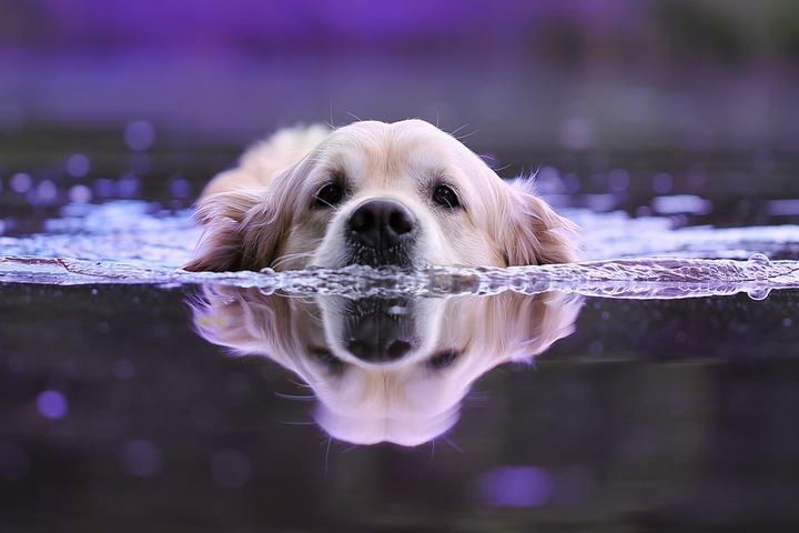 """铲屎官不要有""""洁癖""""心理:宠物狗狗在外面弄脏了也不要太过于担心"""