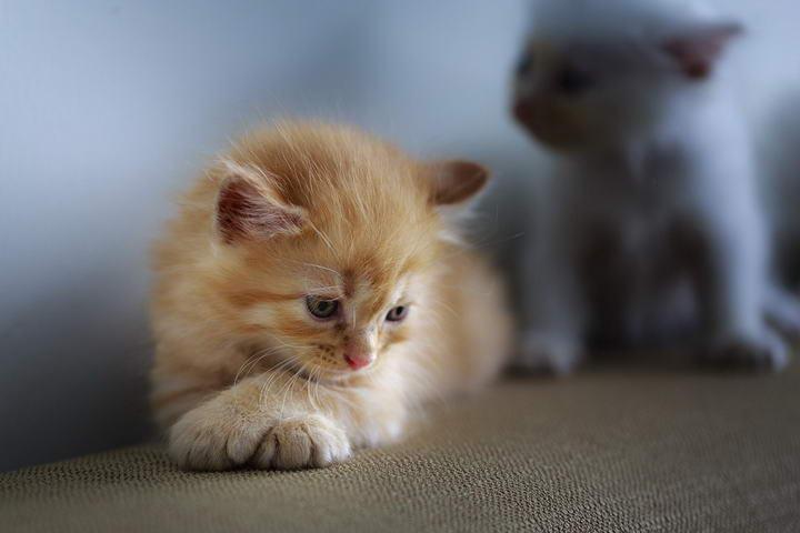 猫咪掉毛怎么办?