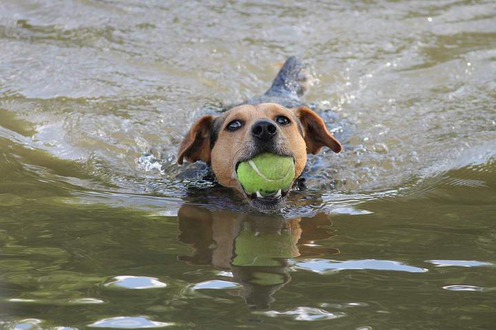 宠物狗狗夏季戏水,你应该知道的事