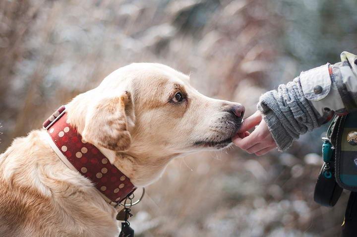 关于宠物心丝虫的十个问题