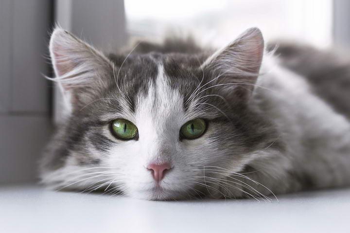 猫咪喵喵叫究竟表示什么