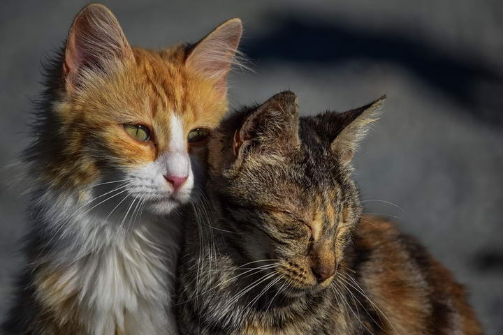 当同伴死去的时候,猫咪会感到哀伤/悲伤么?