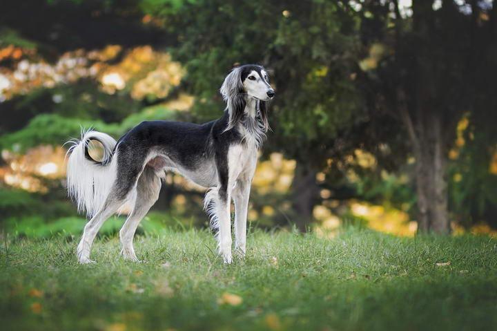 猎犬有哪些个性?