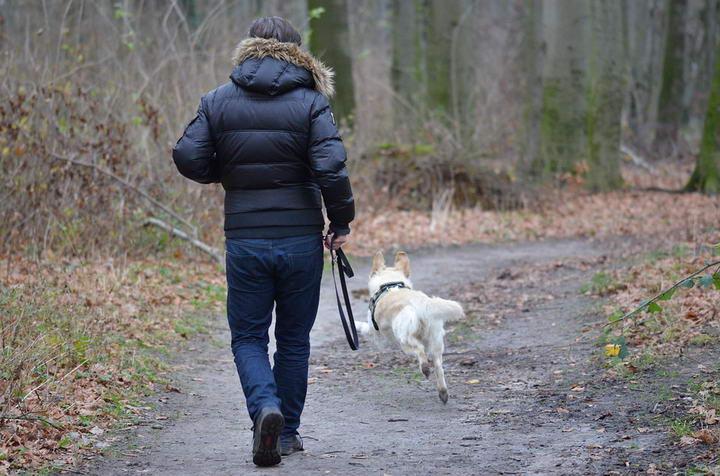 遛狗的技巧:如何避免被狗遛