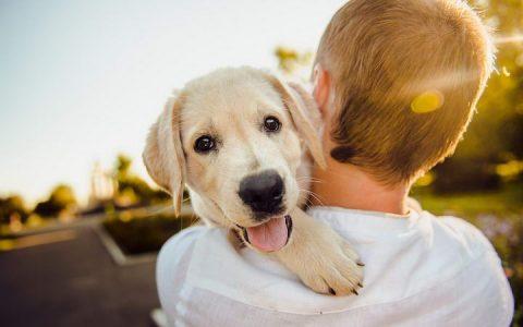 狗狗向主人表达开心的十种方式