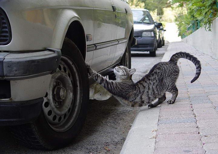 猫咪搔抓训练入门