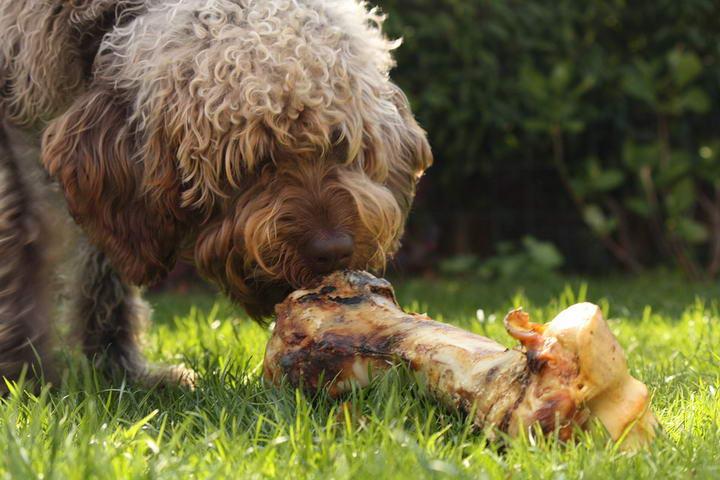 我的狗狗会因为食物过敏吗?