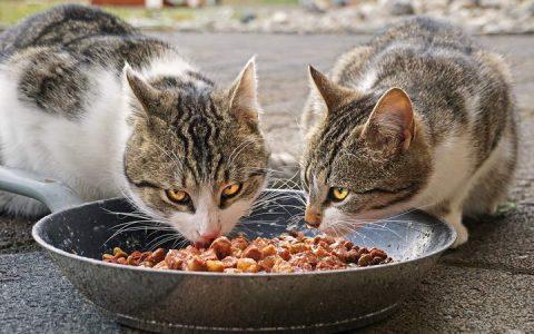喂食猫咪有哪些需要注意的地方