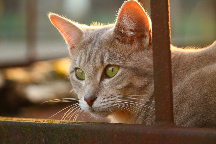 猫咪的平均寿命为几岁?有哪些影响因素