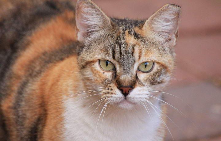 如何做可以让猫咪能够更长寿
