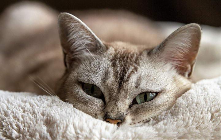 猫咪招人喜爱的六个理由