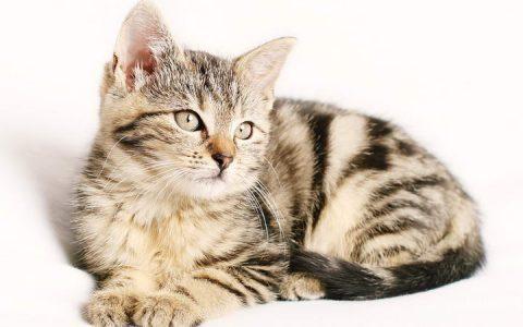 什么叫做星期猫/周期猫?