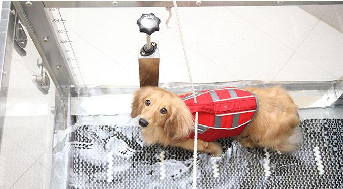 宠物狗狗的特殊疗法:宠物水疗