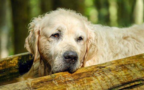 宠物猫咪和狗狗的老化症状检测表