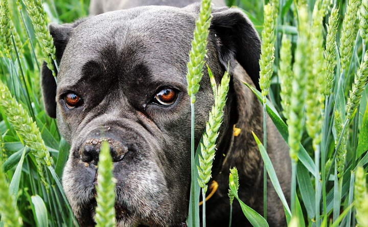 为什么狗狗也会有抑郁症?
