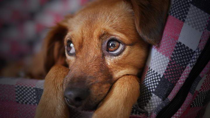 如何判断狗狗的情绪好坏?该怎么调整?
