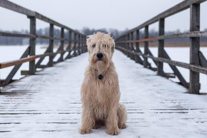 狗狗有抑郁症我们该如何对待?