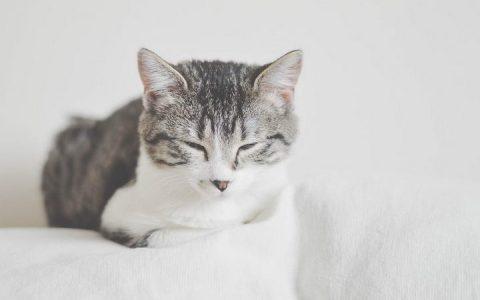 猫咪的呼噜声居然还能帮助人类治病?