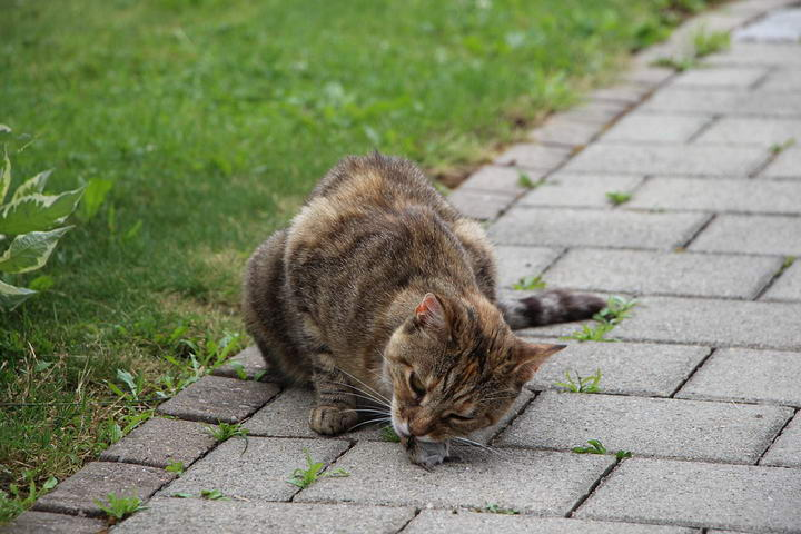 幼猫猫粮应该如何选择?长大之后应该换猫粮吗? 原来这样照顾猫咪才正确 !