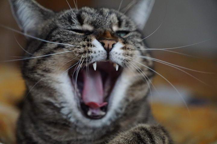 喵星人的喵喵叫都表达什么意思呢?