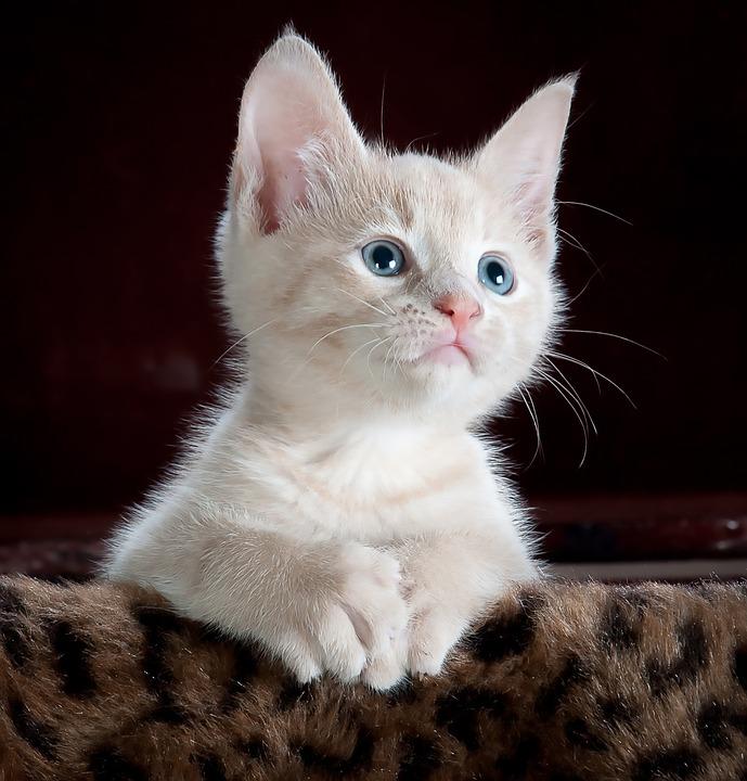 猫咪的十个可爱瞬间