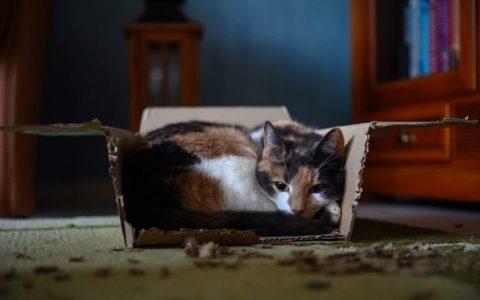 科学家研发新疫苗,可以让对猫咪过敏的人不再过敏