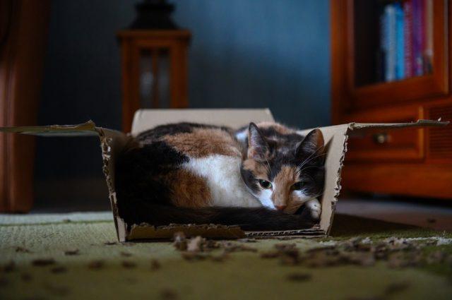 ▲过敏是猫咪被遗弃的常见原因。(Source:pixbay)