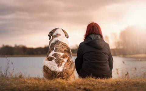 宠物猫咪和狗狗去世后我们有哪些好的方式来处理它们