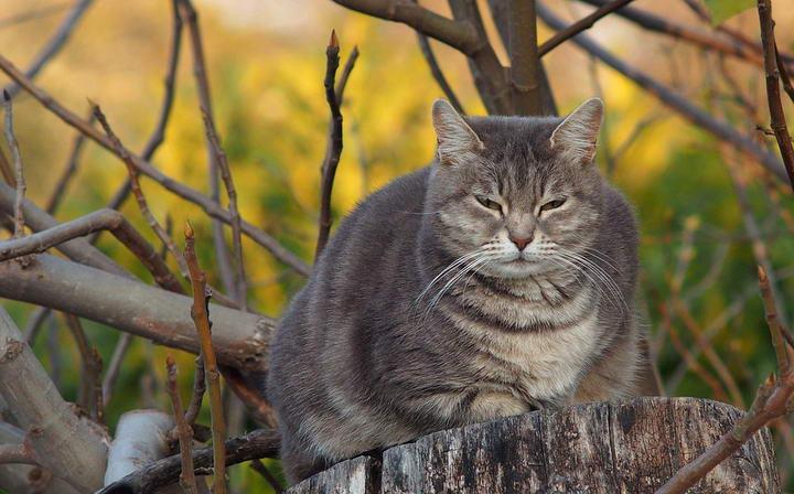如何判断宠物狗狗和猫咪体型是否过胖?