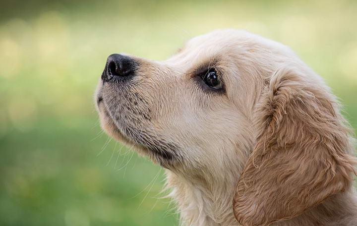狗狗的生活环境与天性