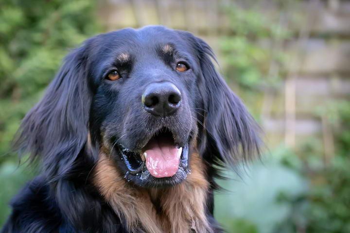 从狗狗的异常行为看疾病征兆