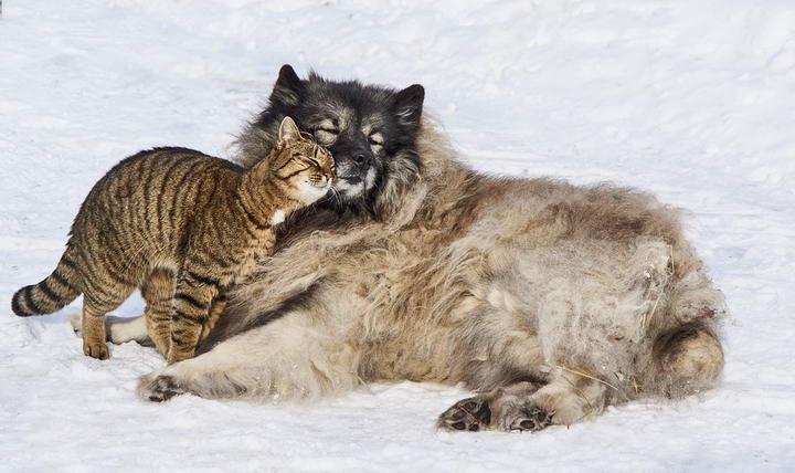 什么!宠物猫咪和狗狗也会椎间盘突出?